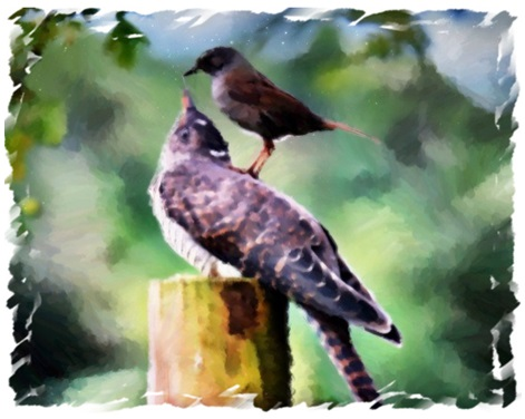 The grouse and the cuckoo
